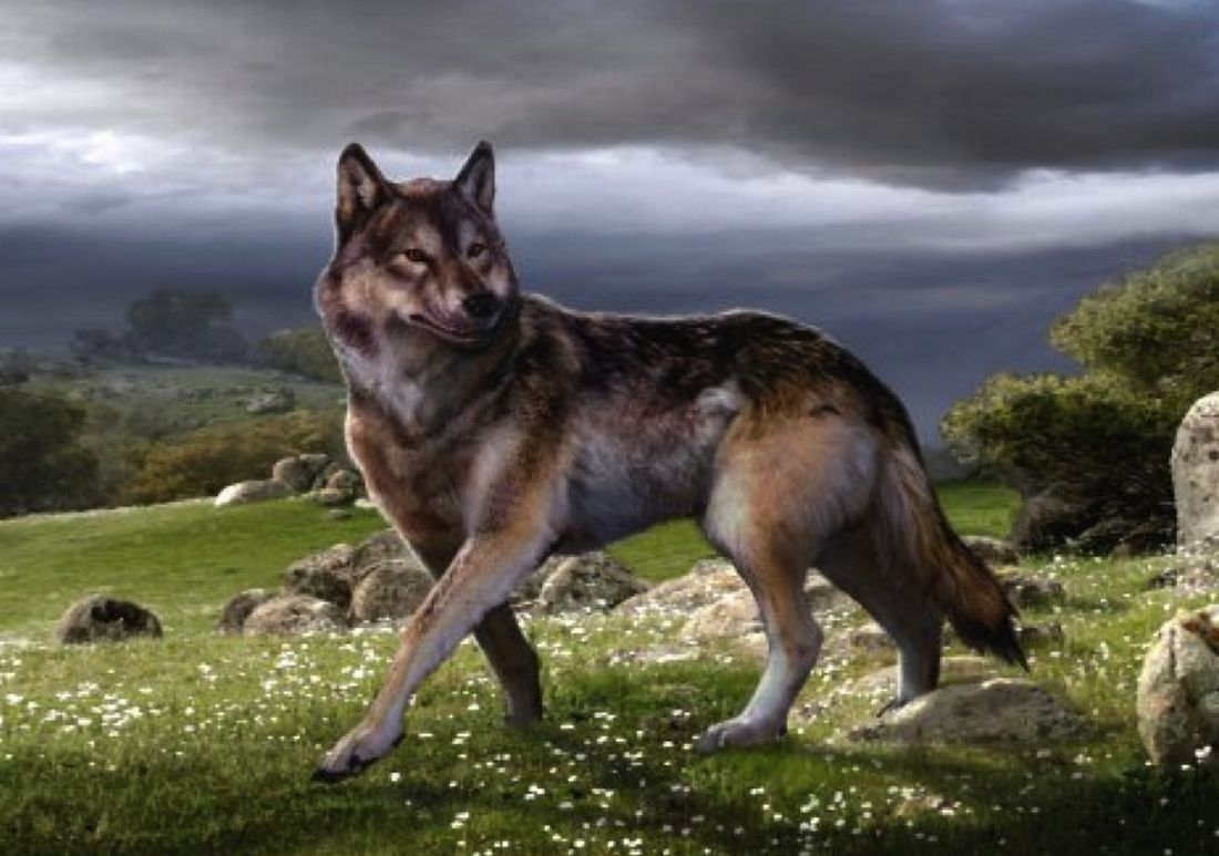 direwolf | Euro Palace Casino Blog